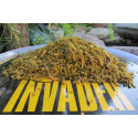 Bird food insect